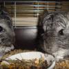 Samiec i samiczka, szybkie łączenie - ostatni post przez Muffinkowa